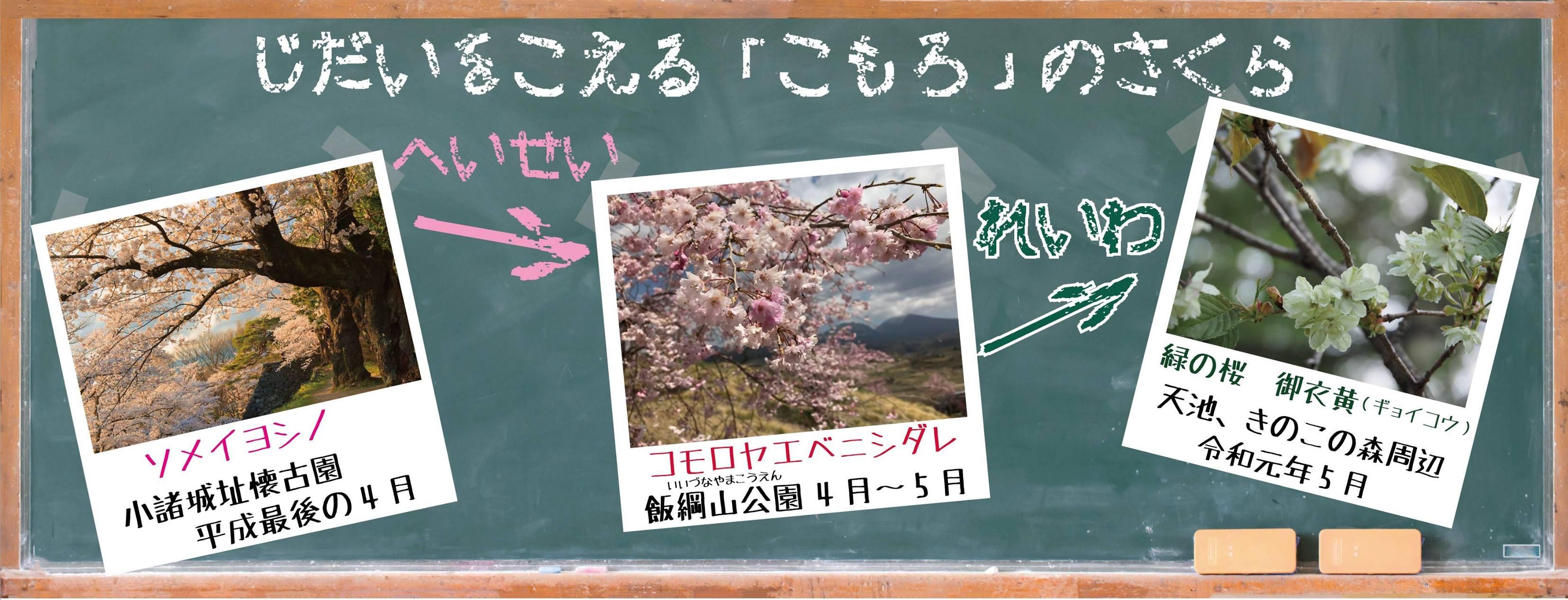 平成から令和へ!時代を超える小諸の桜 5月中旬頃までお花見が楽しめます!